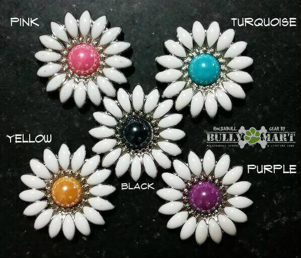 daisy-flower-color-options.jpg